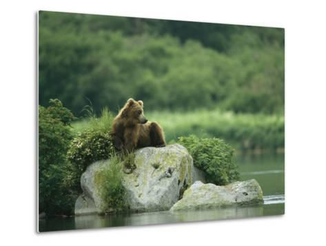 A Brown Bear Resting on a Rock at the Waters Edge-Klaus Nigge-Metal Print