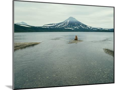 A Brown Bear Sitting on a Sandbar in a River Near a Volcanic Mountain-Klaus Nigge-Mounted Photographic Print