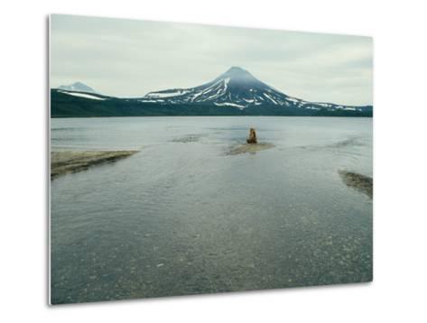 A Brown Bear Sitting on a Sandbar in a River Near a Volcanic Mountain-Klaus Nigge-Metal Print