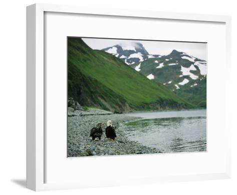 An Adult and Juvenile American Bald Eagle Rest Along the Shoreline-Klaus Nigge-Framed Art Print