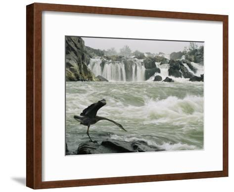 Great Blue Heron Stretches its Neck toward the Potomac River-Skip Brown-Framed Art Print