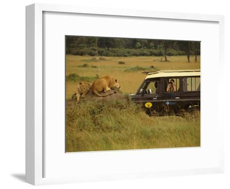Tourist Views Lions from a Safari Jeep-Richard Nowitz-Framed Art Print