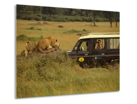 Tourist Views Lions from a Safari Jeep-Richard Nowitz-Metal Print