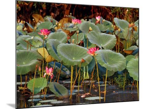 Plants and Flowers along Yellow River, Kakadu National Park, Australia-John Banagan-Mounted Photographic Print