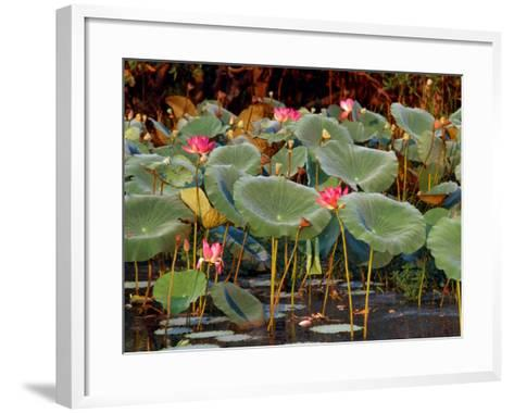 Plants and Flowers along Yellow River, Kakadu National Park, Australia-John Banagan-Framed Art Print