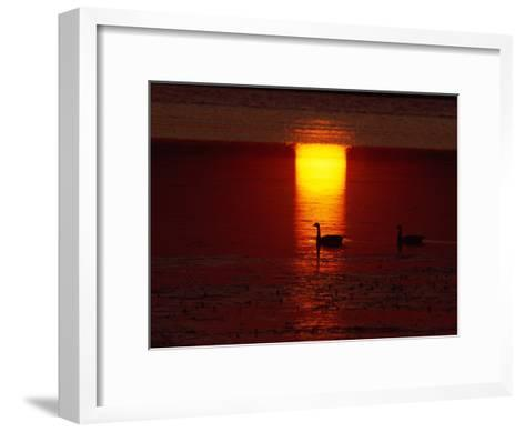 Silhouetted Canada Geese at Twilight-Medford Taylor-Framed Art Print