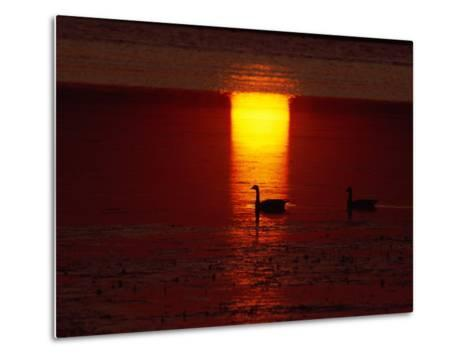 Silhouetted Canada Geese at Twilight-Medford Taylor-Metal Print
