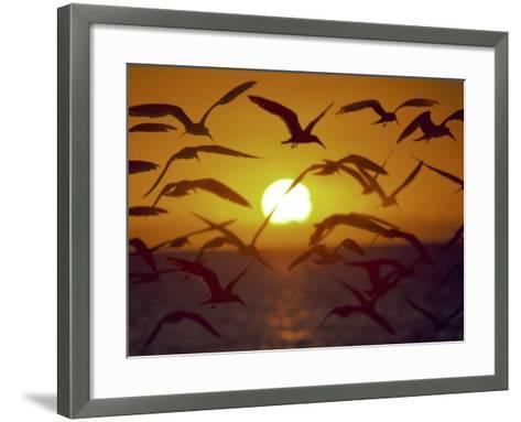 Sunset and Seagulls on Green Key, Port Richey-Dennis Macdonald-Framed Art Print