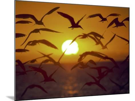 Sunset and Seagulls on Green Key, Port Richey-Dennis Macdonald-Mounted Photographic Print
