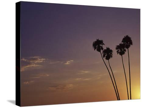 Sunset and Palm Trees, Laguna Beach, CA-Mitch Diamond-Stretched Canvas Print
