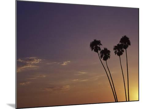 Sunset and Palm Trees, Laguna Beach, CA-Mitch Diamond-Mounted Photographic Print