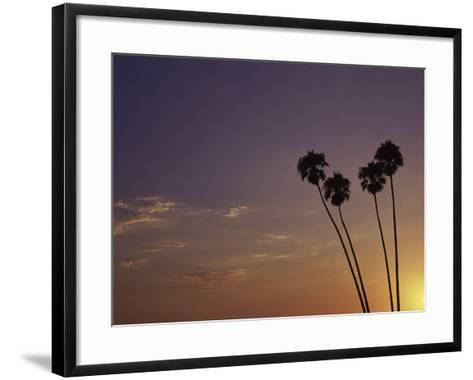 Sunset and Palm Trees, Laguna Beach, CA-Mitch Diamond-Framed Art Print