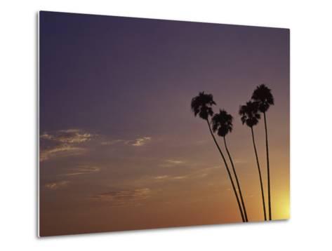 Sunset and Palm Trees, Laguna Beach, CA-Mitch Diamond-Metal Print