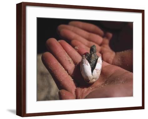 Diamondback Terrapin Hatching-Eunice Harris-Framed Art Print