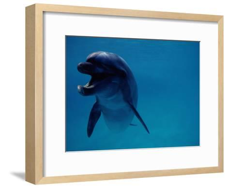 A Bottlenose Dolphin Swims in the Aquarium at Sea Life Park-Chris Johns-Framed Art Print