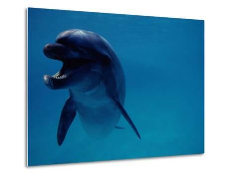 A Bottlenose Dolphin Swims in the Aquarium at Sea Life Park-Chris Johns-Metal Print