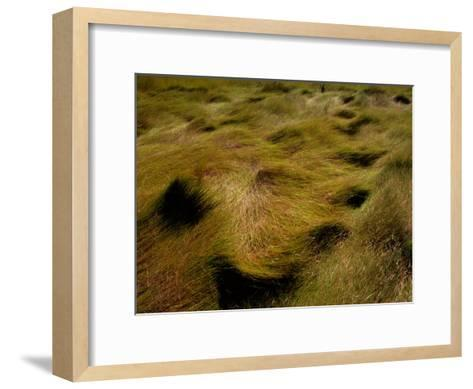 Thick Grasses Blow in the Wind-Todd Gipstein-Framed Art Print