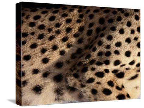 A Close View of an African Cheetahs Spotted Fur-Chris Johns-Stretched Canvas Print