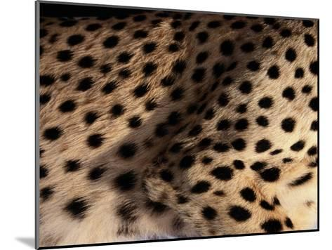 A Close View of an African Cheetahs Spotted Fur-Chris Johns-Mounted Photographic Print