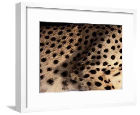 A Close View of an African Cheetahs Spotted Fur-Chris Johns-Framed Art Print