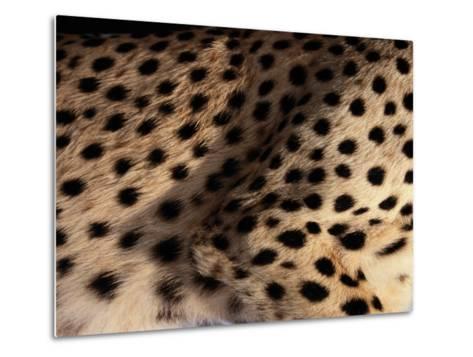 A Close View of an African Cheetahs Spotted Fur-Chris Johns-Metal Print