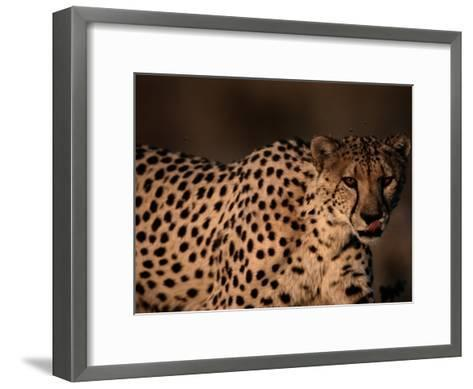 A Portrait of a Hungry African Cheetah-Chris Johns-Framed Art Print