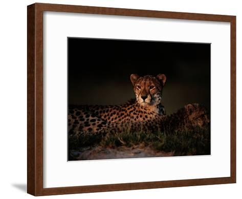 A Female African Cheetah and Her Cub Rest Together in the Early Evening-Chris Johns-Framed Art Print