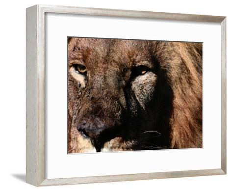 Portrait of a Male African Lion-Chris Johns-Framed Art Print