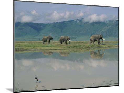 A Herd of African Elephants Traveling Along a River in Chobe National Park-Beverly Joubert-Mounted Photographic Print
