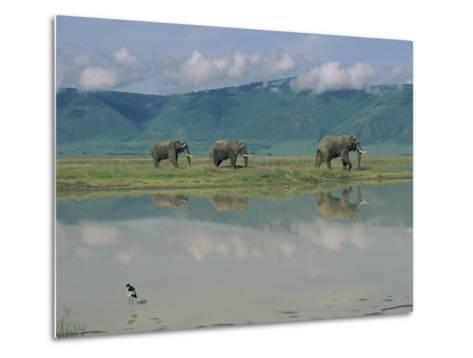 A Herd of African Elephants Traveling Along a River in Chobe National Park-Beverly Joubert-Metal Print
