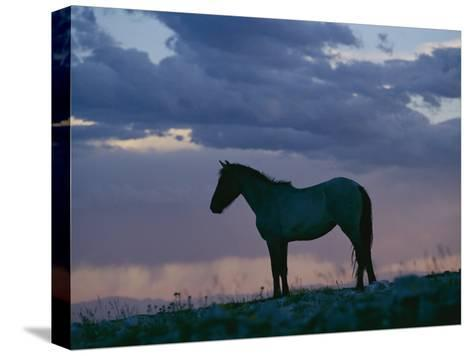 A Wild Horse is Silhouetted by the Setting Sun-Raymond Gehman-Stretched Canvas Print