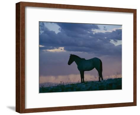 A Wild Horse is Silhouetted by the Setting Sun-Raymond Gehman-Framed Art Print
