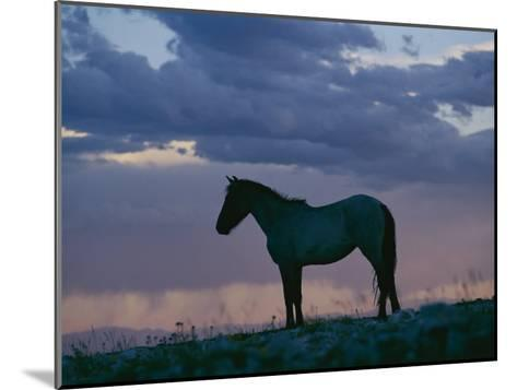 A Wild Horse is Silhouetted by the Setting Sun-Raymond Gehman-Mounted Photographic Print