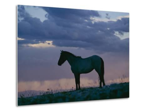 A Wild Horse is Silhouetted by the Setting Sun-Raymond Gehman-Metal Print