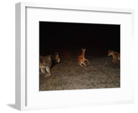 Two African Lions Close in on an Impala-Beverly Joubert-Framed Art Print