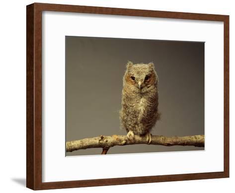 A Screech Owl-Scott Sroka-Framed Art Print