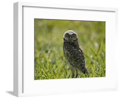 Burrowing Owl-Robert Madden-Framed Art Print