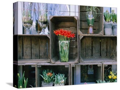 Tulips in Vases Atop Makeshift Wooden Crates-Sisse Brimberg-Stretched Canvas Print