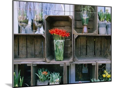 Tulips in Vases Atop Makeshift Wooden Crates-Sisse Brimberg-Mounted Photographic Print