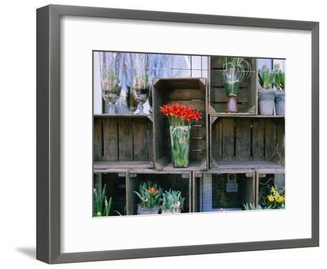 Tulips in Vases Atop Makeshift Wooden Crates-Sisse Brimberg-Framed Art Print