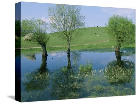 Marshy Area Near the Lejre Open-Air Museum-Sisse Brimberg-Stretched Canvas Print
