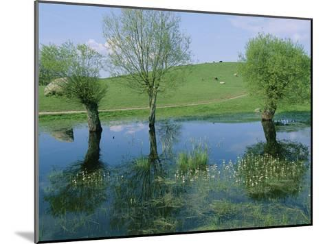 Marshy Area Near the Lejre Open-Air Museum-Sisse Brimberg-Mounted Photographic Print
