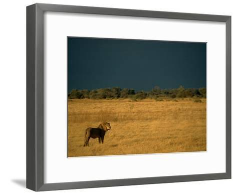 A Male African Lion Looks out over His Territory-Beverly Joubert-Framed Art Print