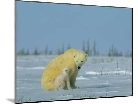 A Female Polar Bear Looks Affectionately Toward Her Cub-Norbert Rosing-Mounted Photographic Print