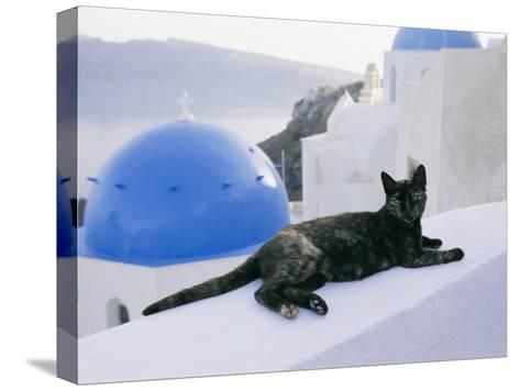 A Black Cat Sitting Atop a Low Wall-Todd Gipstein-Stretched Canvas Print