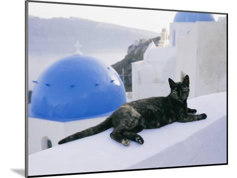 A Black Cat Sitting Atop a Low Wall-Todd Gipstein-Mounted Photographic Print