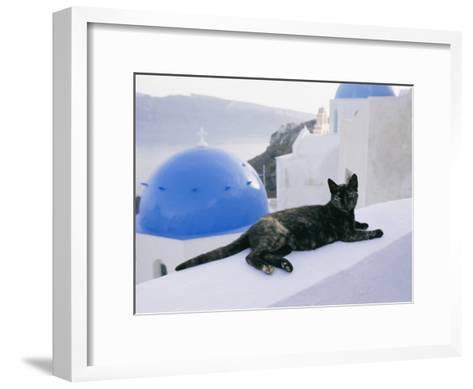 A Black Cat Sitting Atop a Low Wall-Todd Gipstein-Framed Art Print