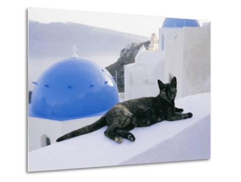 A Black Cat Sitting Atop a Low Wall-Todd Gipstein-Metal Print