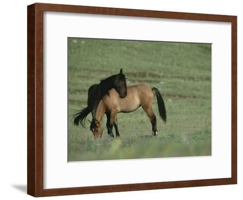 Two Wild Horses Bonding in a Field-Chris Johns-Framed Art Print