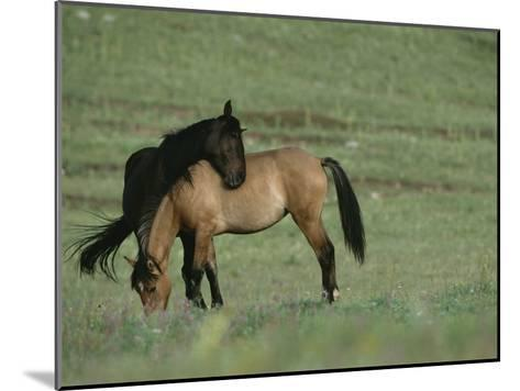 Two Wild Horses Bonding in a Field-Chris Johns-Mounted Photographic Print
